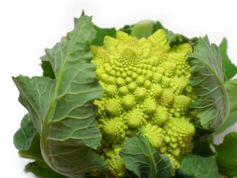 Le brocoli Romanesco
