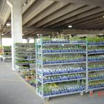 plants in small containers on carts