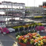 colourful flowers in pots and hanging baskets