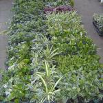 selection of green potted plants