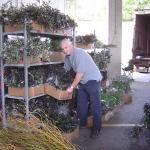 man unloading box of plants