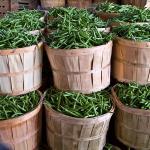 bushels of green beans