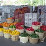 bushels multiple colours of bell peppers and other produce