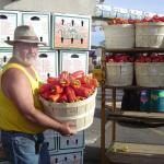 man carrying bushel of red peppers